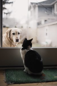 Safety solutions for dogs and cats